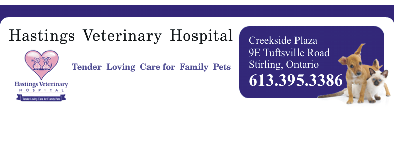 Hastings Veterinary Hospital
